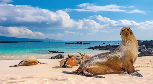 Galapagos Cruising